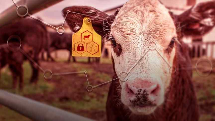 BeefChain Beef Supply Chain